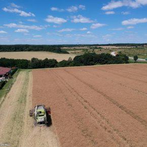 Repce aratás